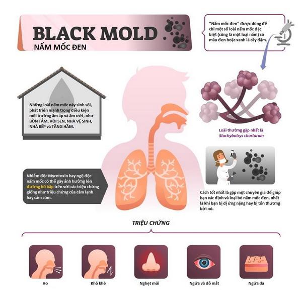 Nấm mốc đen gây ảnh hưởng đến biệt thự và sức khỏe